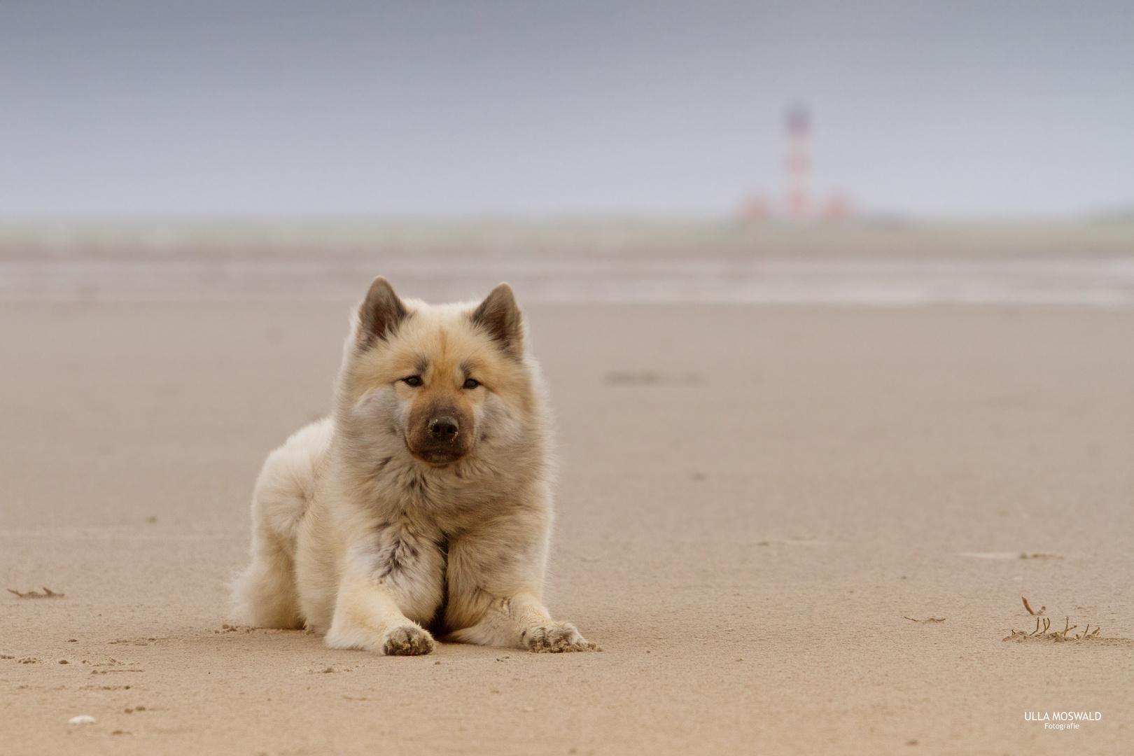 ...Grüße von der Nordsee...