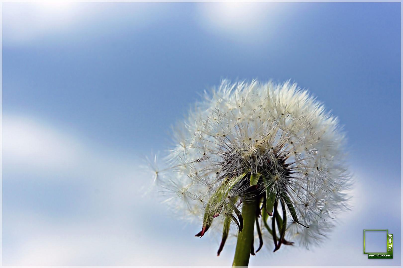 Grüßt mir den Wind...die Sonne...