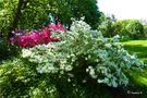 Gruga - Essen - Rhododendrontal von Ingeborg K