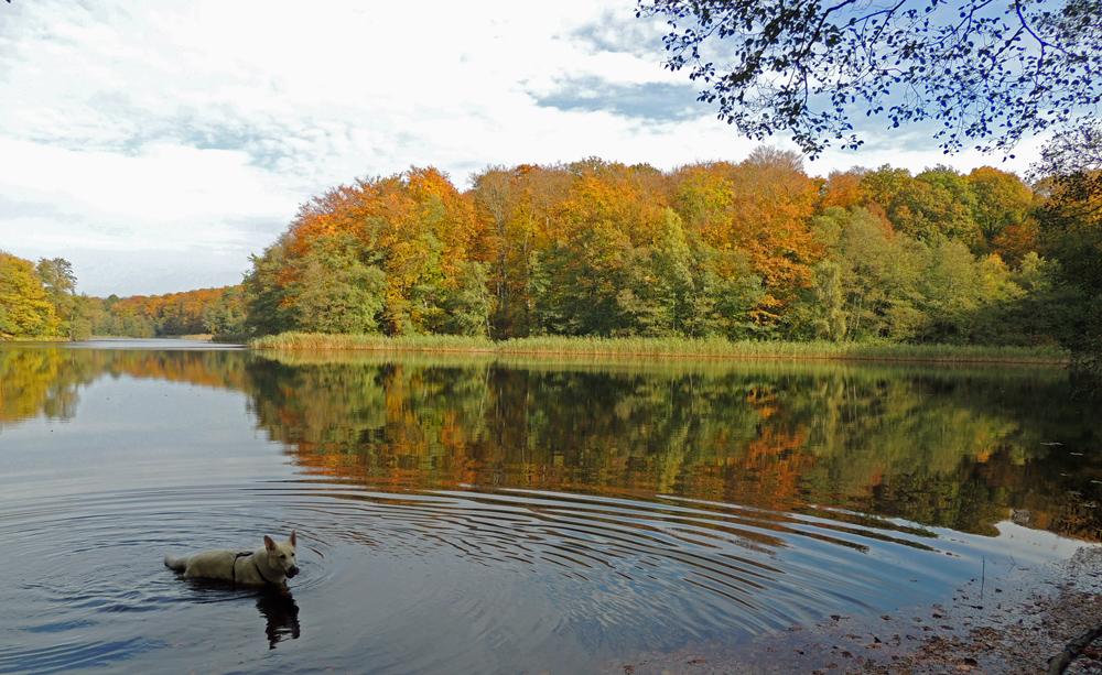 Grumsiner Forst im Herbst