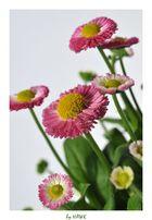 Gruppenbild mit Gänseblümchen