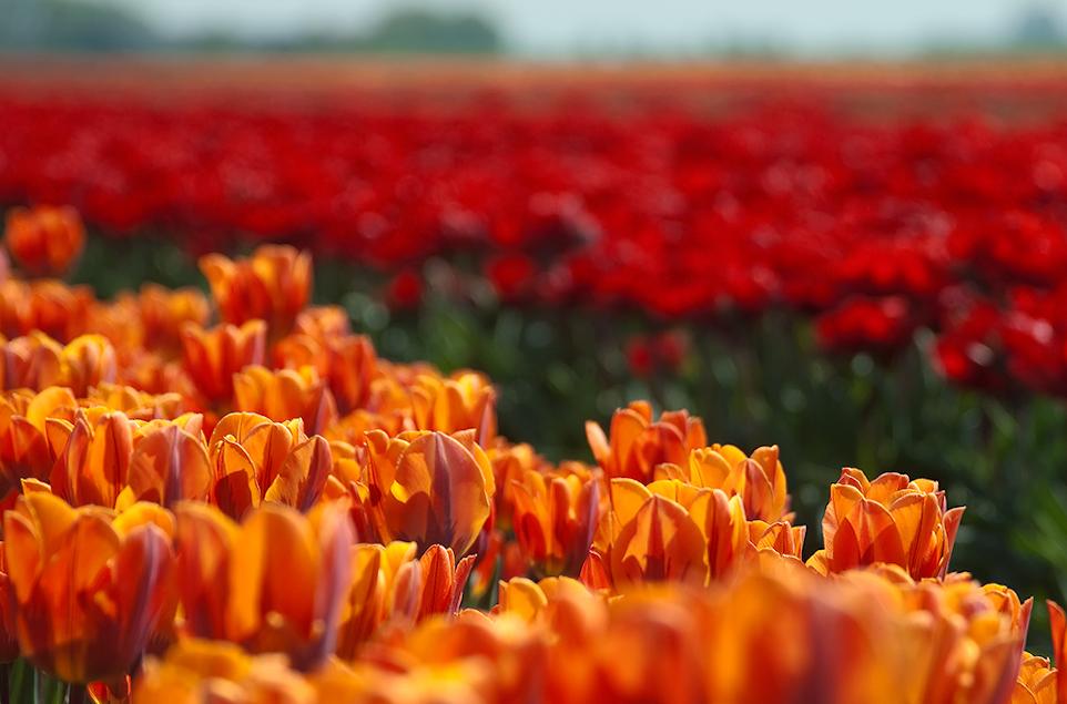 Gruß aus Holland 4