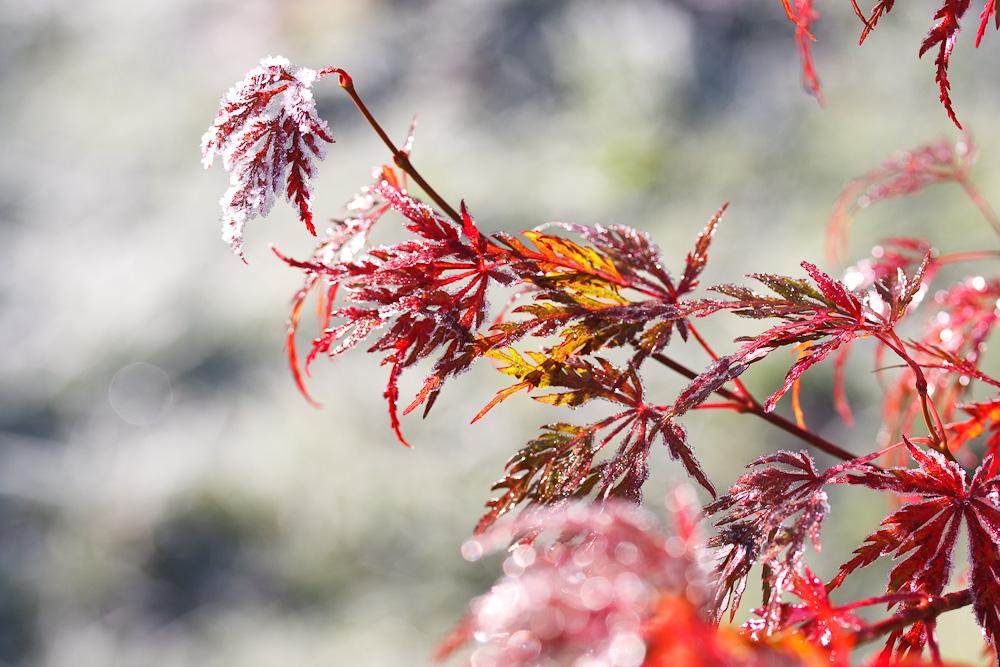Gruß vom Winter