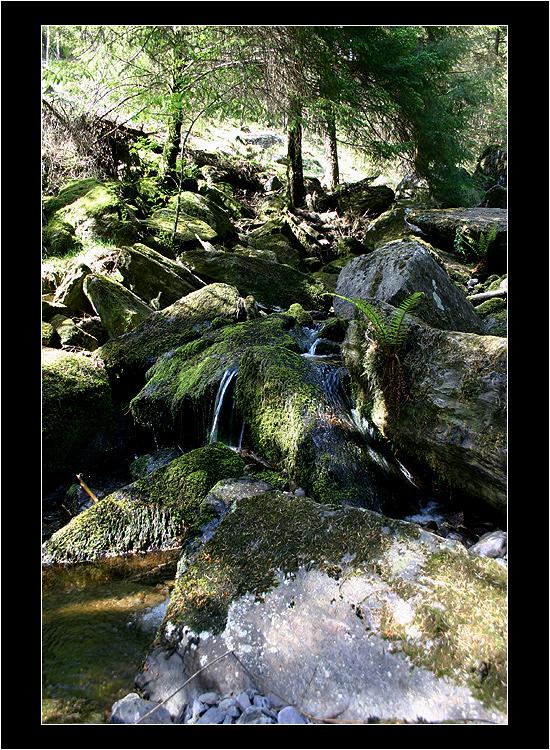 Guagan Bara Forest Park II