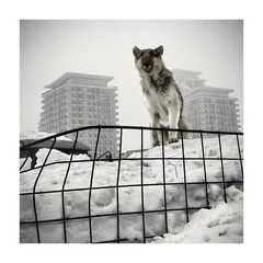 guardian of the city ...
