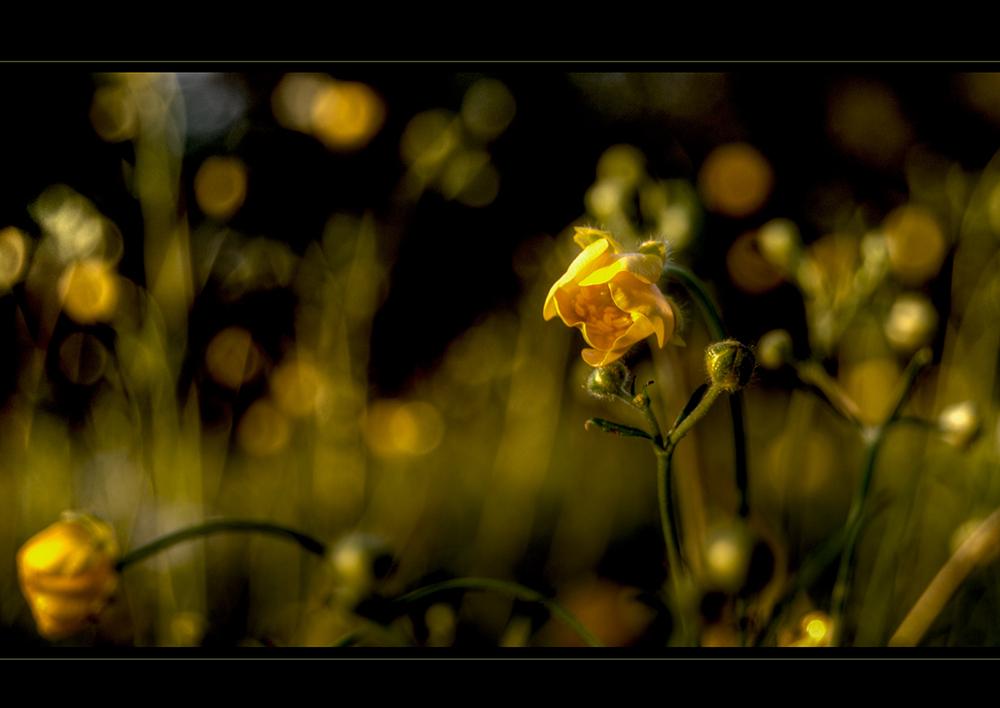 ... güldenes Blümchen im güldenen Licht...