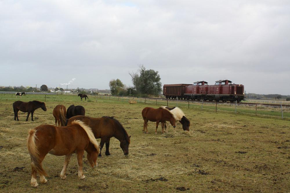Güterverkehr wie zu Bundesbahnzeiten!