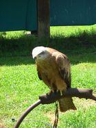 Águila enfadada......