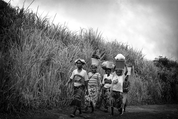 Guinée - le monde dans la foret - 04