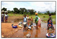 Guinée - Le monde dans la foret - OPEN LAUNDRY