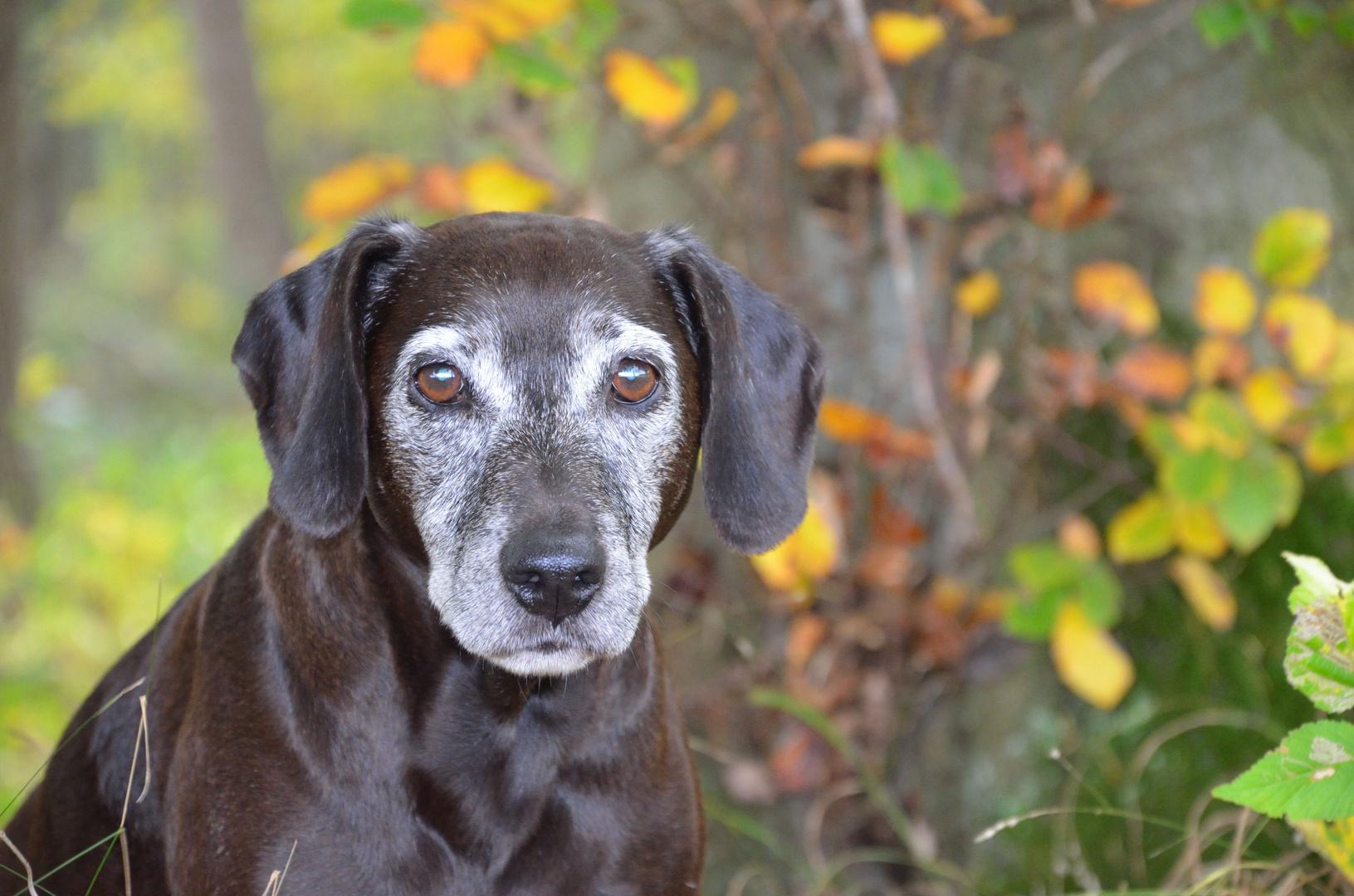 Guinness, der Herbsthund