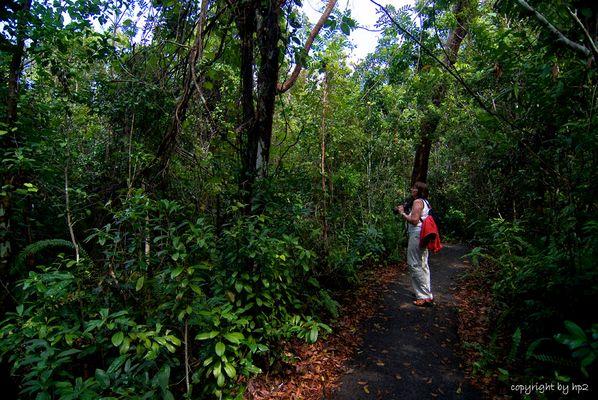 Gumbo Limbo Trail.........