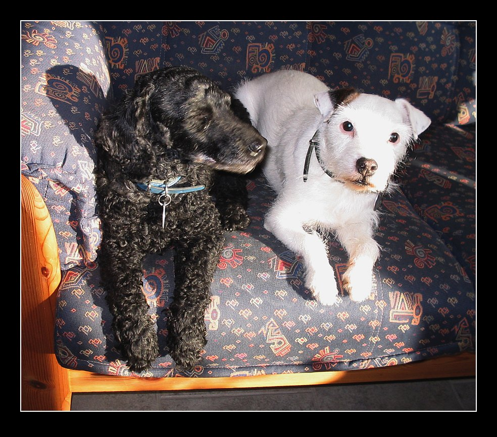Gundel und Tara...beide nun im Regenbogenland...