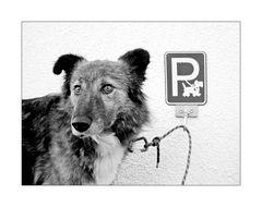 Gut, dass es endlich reservierte Parkplätze für Hunde gibt!