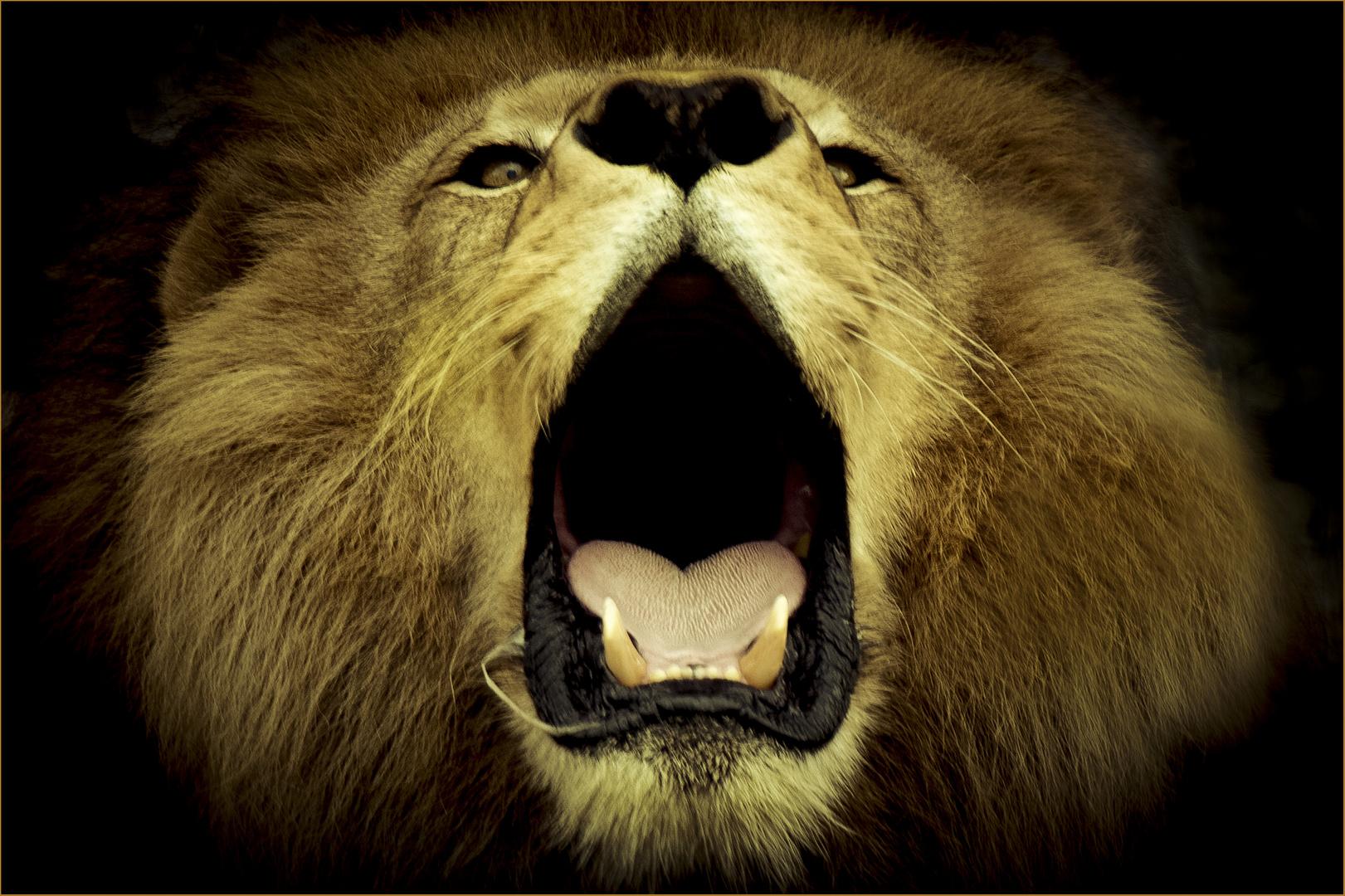 Gut gebrüllt Löwe.....