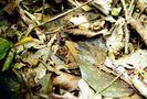 Gut getarnt im Urwald von Costa Rica von Ulrich Maaßen
