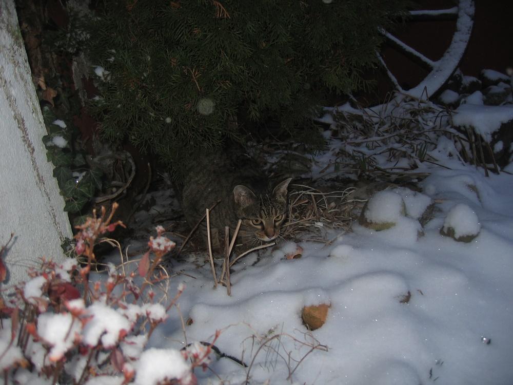 gut getarnt - Jerry im Schnee