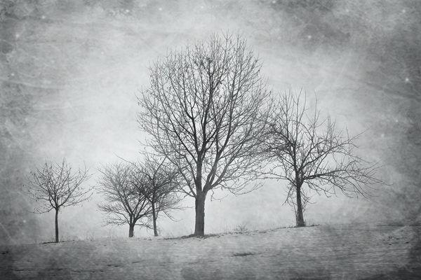 Gute Bäume,