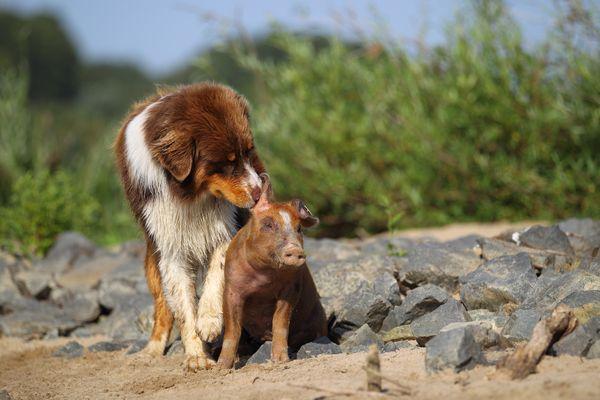 gute Freunde .........................