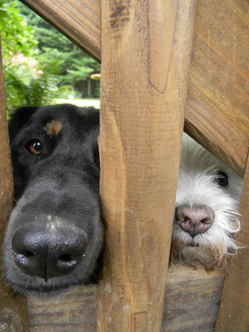 Gute Freunde kann niemand trennen..