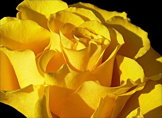 Gute-Laune-Gelb