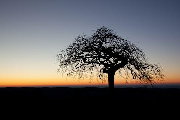 Gute Nacht Baum