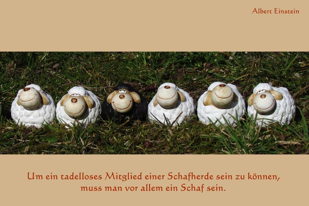 Gute (?) Sprüche - Vol.3