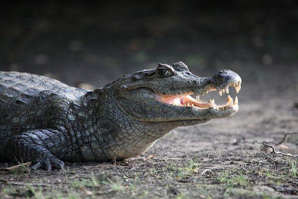 Gute Zahnpflege ist alles ...