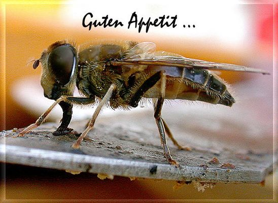 Guten Appetit...