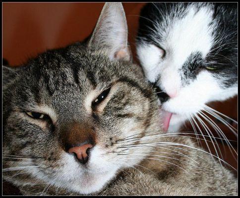 Guten Freunden gibt man mal ein Küsschen :)