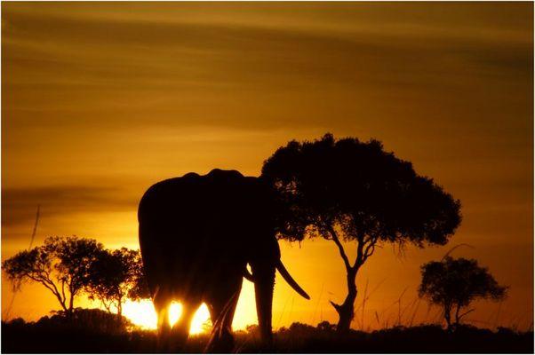 Guten Morgen Afrika