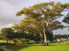 Guten-Morgen-Baum!