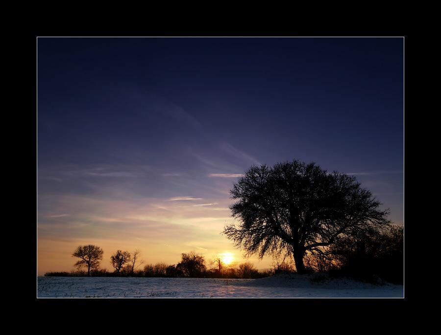 Guten Morgen, Baum!
