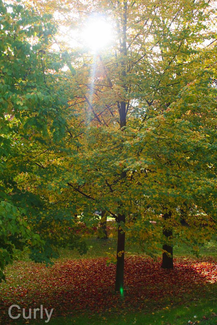 Guten Morgen Herbstsonne