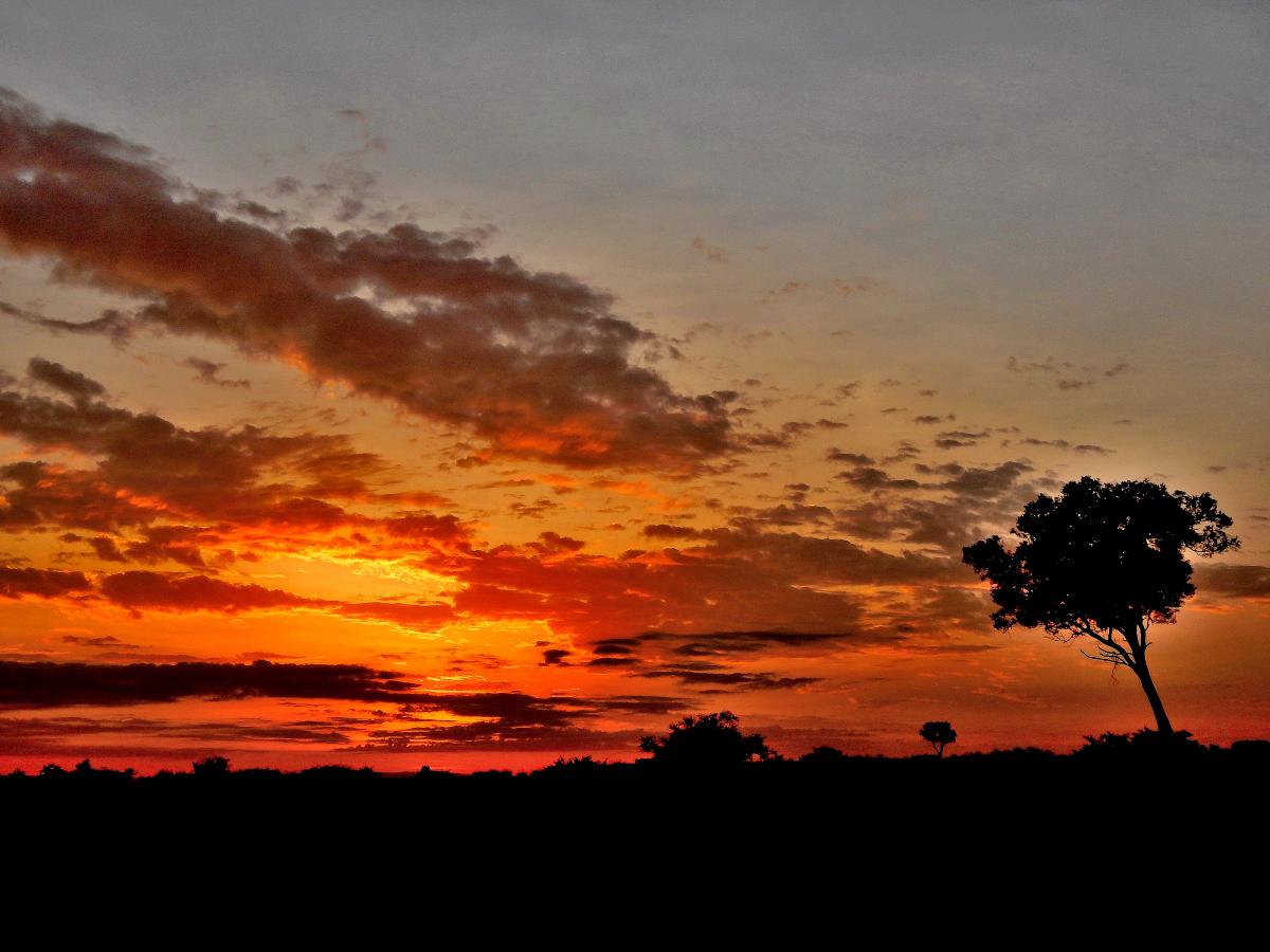 "Guten Morgen "" Kenia "" !"