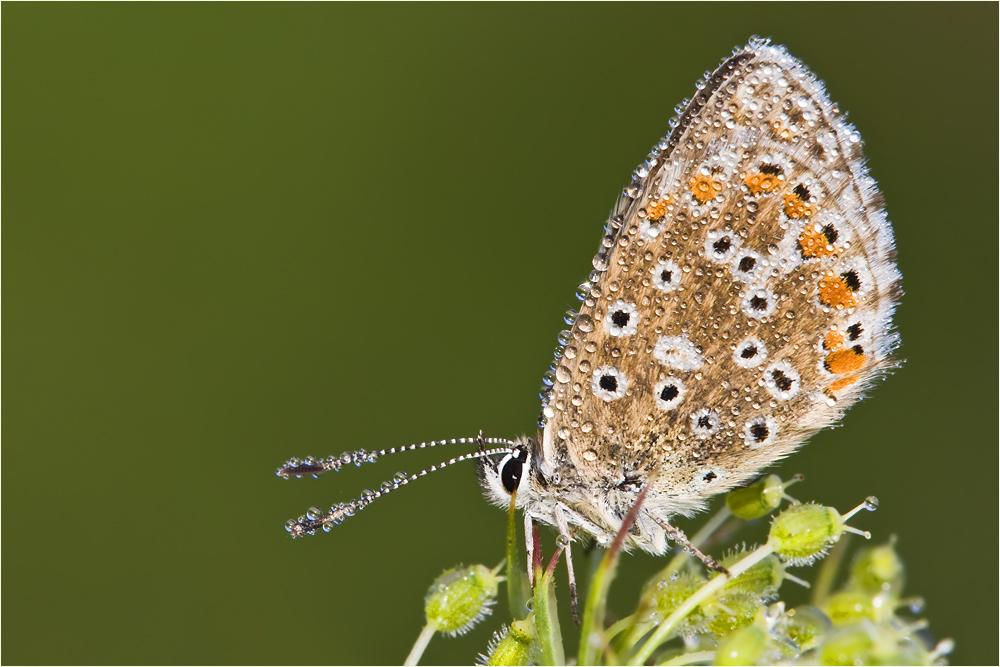 Guten Morgen, kleiner Schmetterling! (6)