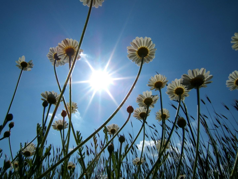 guten Morgen liebe Sonne