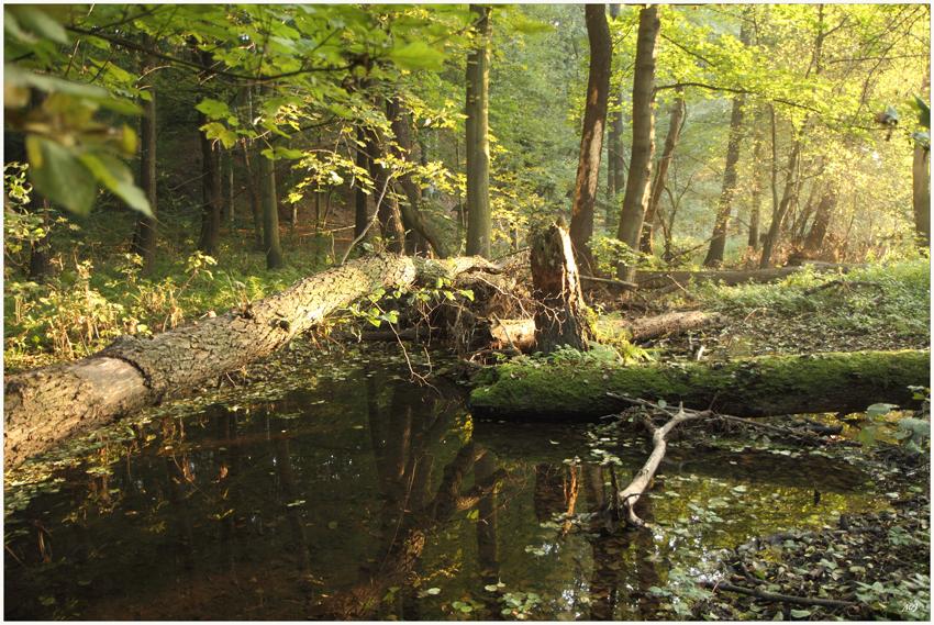 Guten Morgen Märchenwald 2