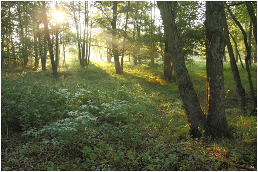Guten Morgen Märchenwald 3