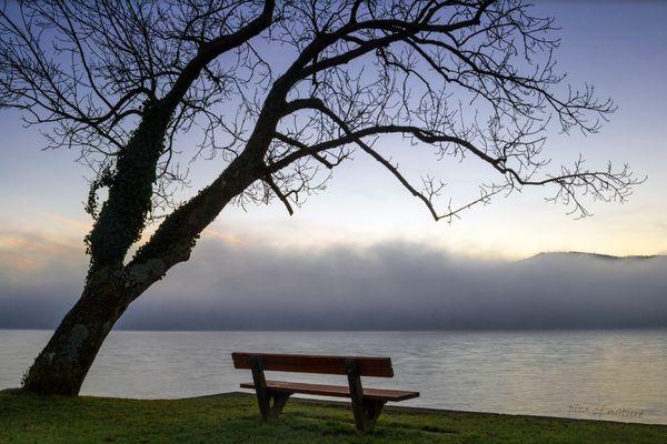 *guten Morgen Nebel Bank*