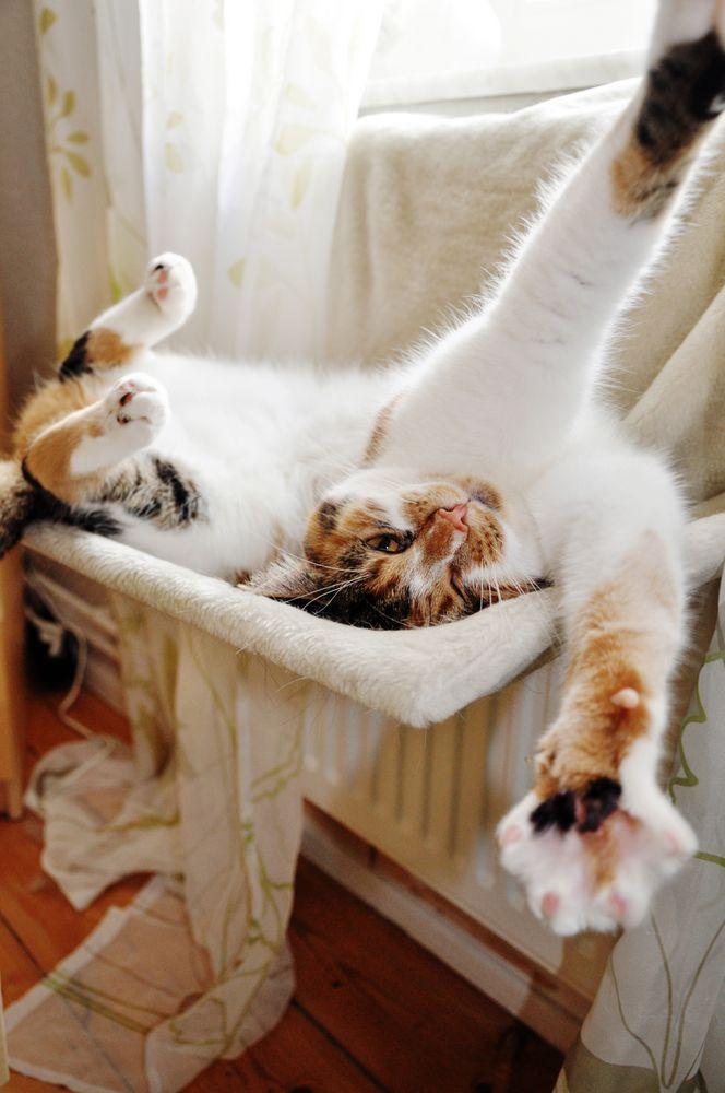 guten morgen prinzessin foto bild tiere haustiere katzen bilder auf fotocommunity. Black Bedroom Furniture Sets. Home Design Ideas