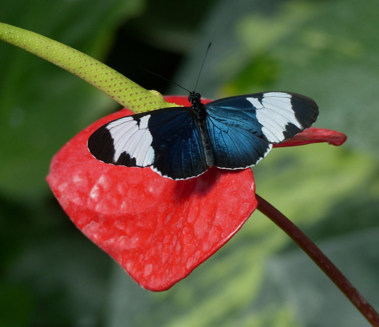 Guten Morgen Schmetterling