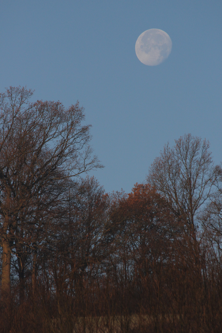 Guter Mond...