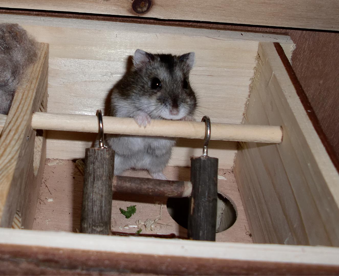 Gwendo will hoch hinaus