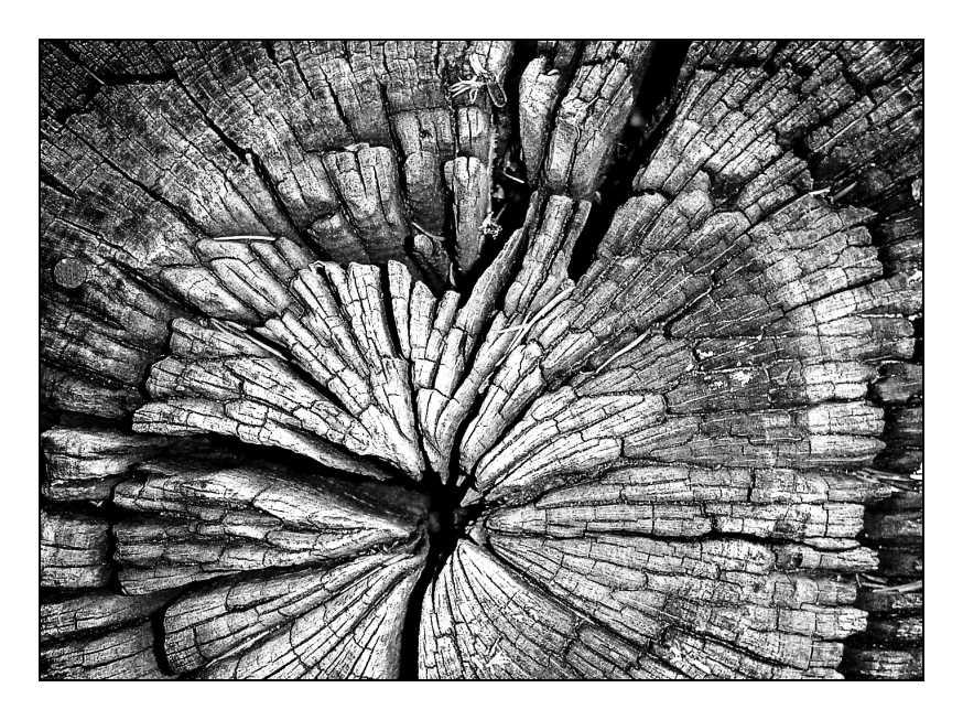 H wie Holz