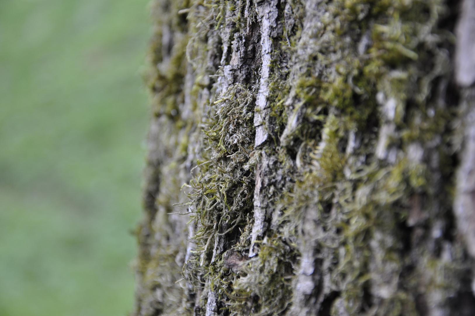 haariger alter Baum