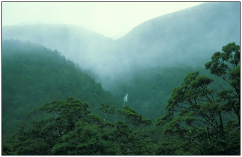 Haast Pass - Südbuchen Wälder