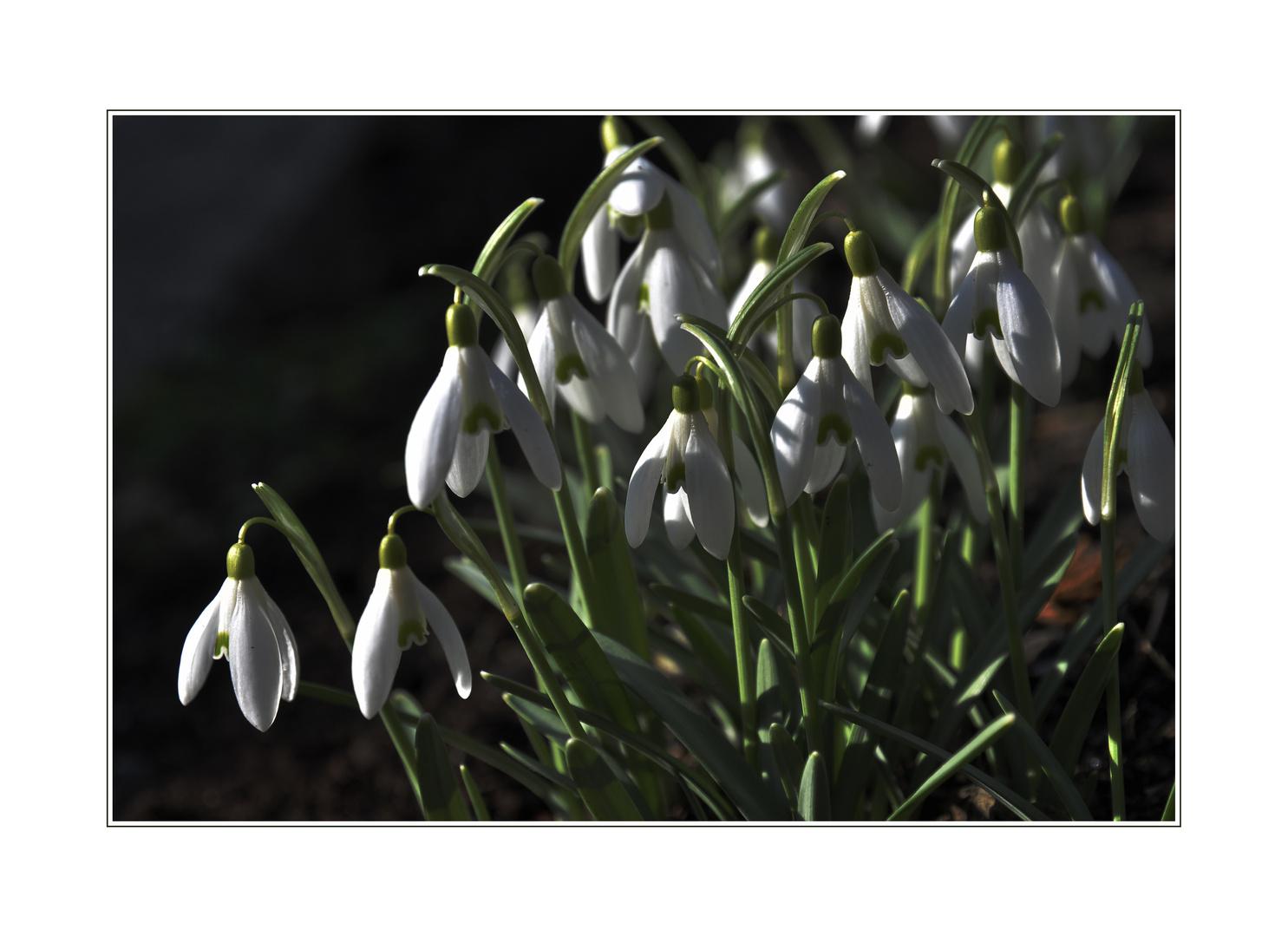 Hab den Frühling gesehen....