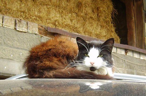 hab heut den Pelzmantel angezogen, is voll zu kalt für September.....