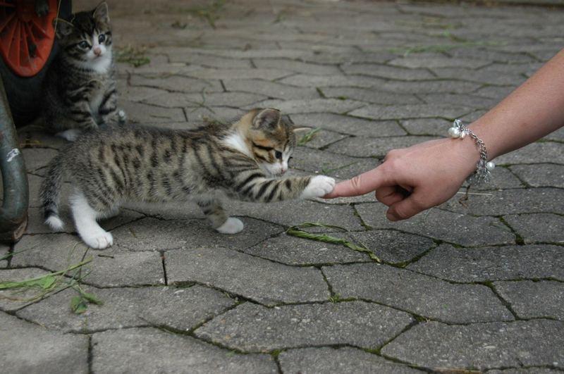 Hab ich dich!
